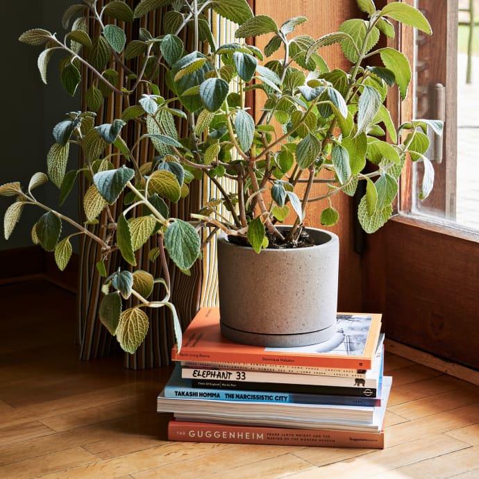 Hay Plant pot
